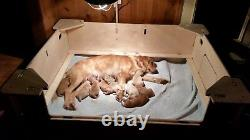 Boîte D'aide, Boîte De Sevrage, Large, Chien, Puppy Pen, Backordered